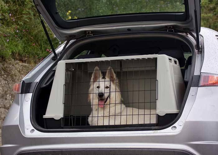 Heavy-Duty Dog Kennels