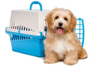Plastic Dog Kennels